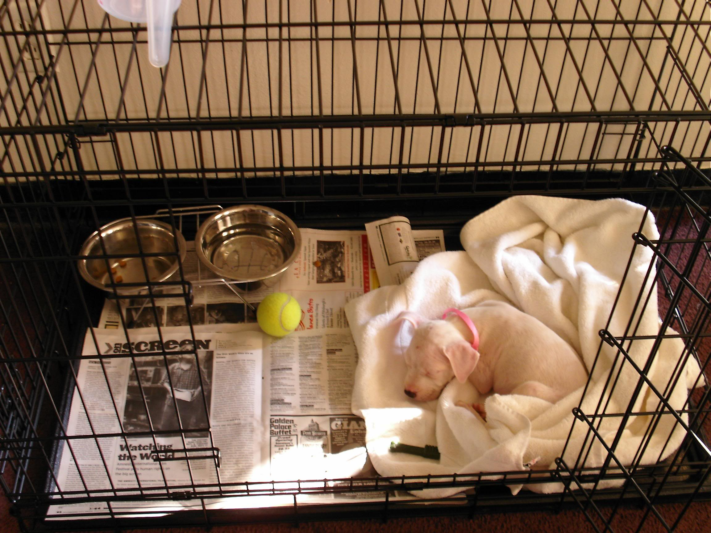 How To Take Care Of Your New Puppy Part 1 Tips And